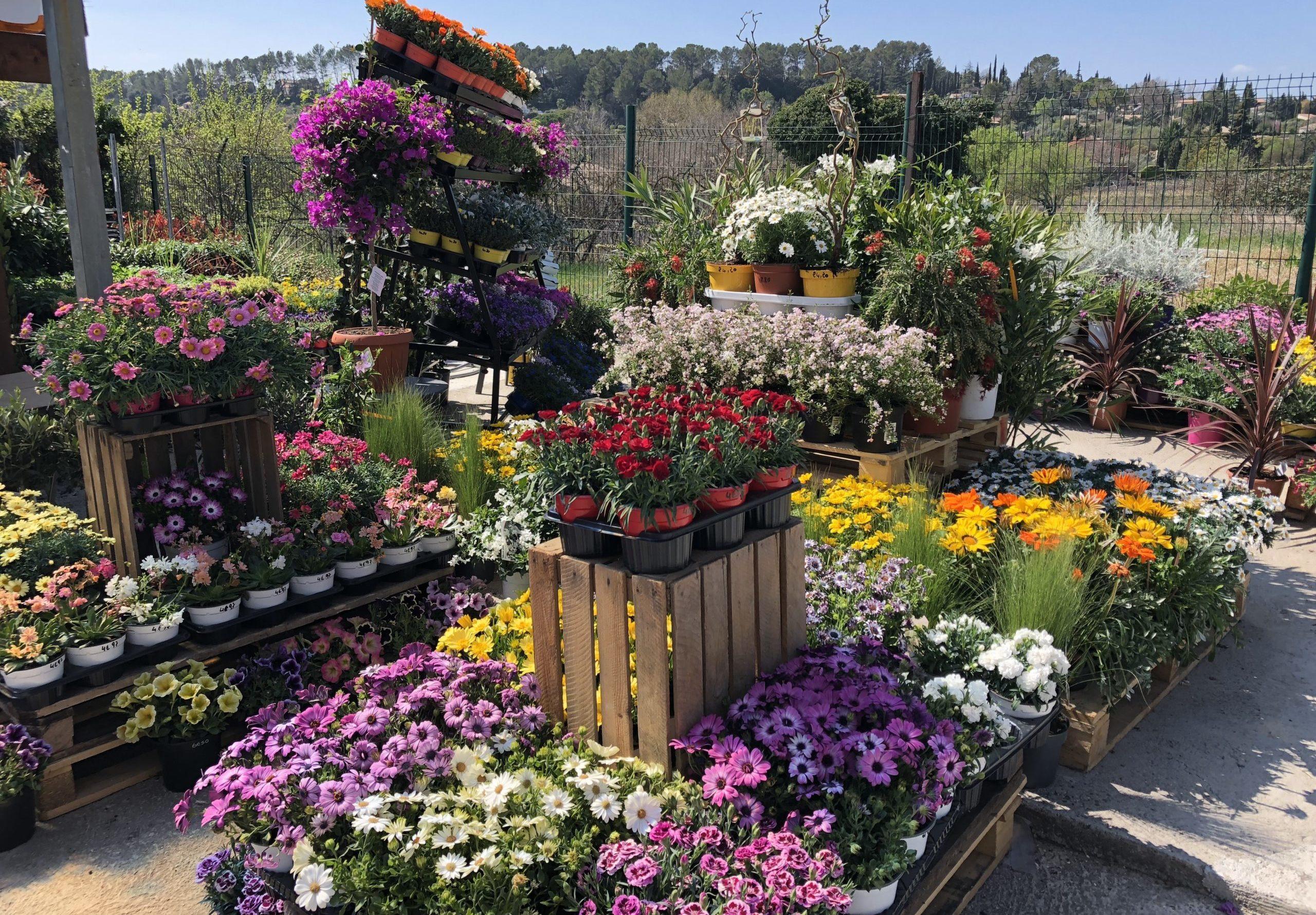 Toutes plantes en pots